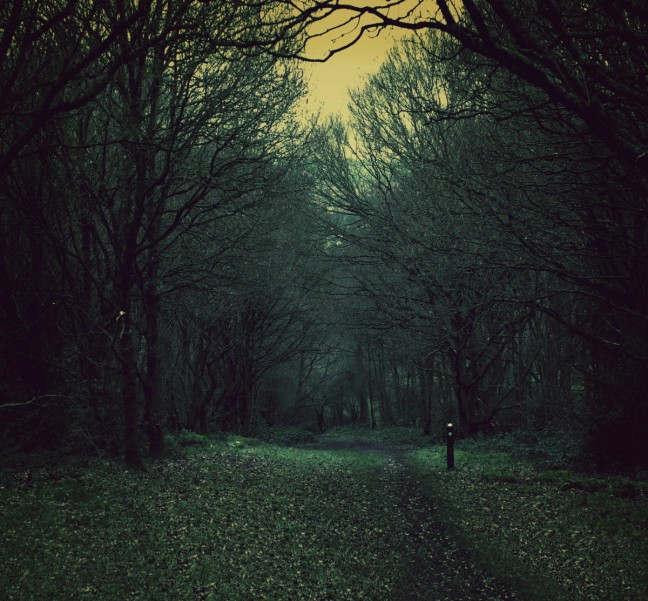 spooky_path_nature_woods_dusk_dark_forest_mystery-1334203